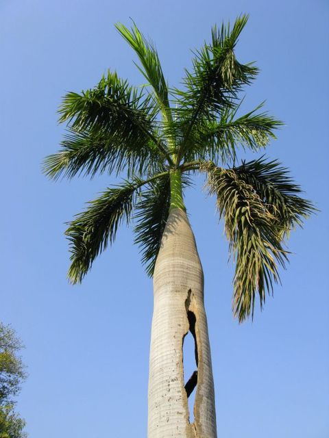 Image of Tree a003