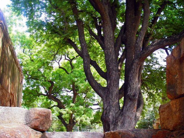 Image of Tree a006