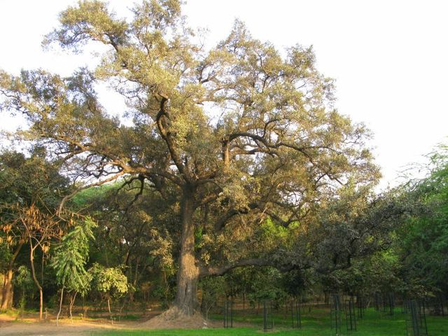 Image of Tree a008