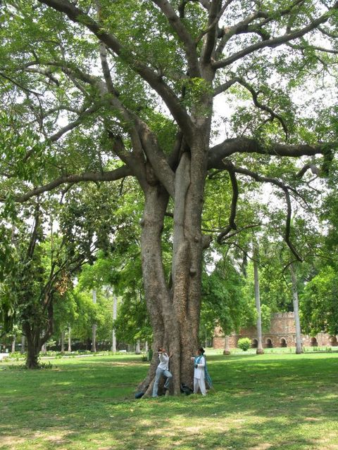 Image of Tree a012