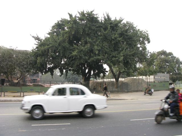 Image of Tree a022