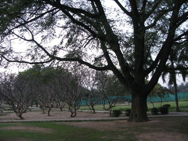 Image of Tree a030