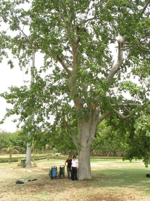 Image of Tree a047