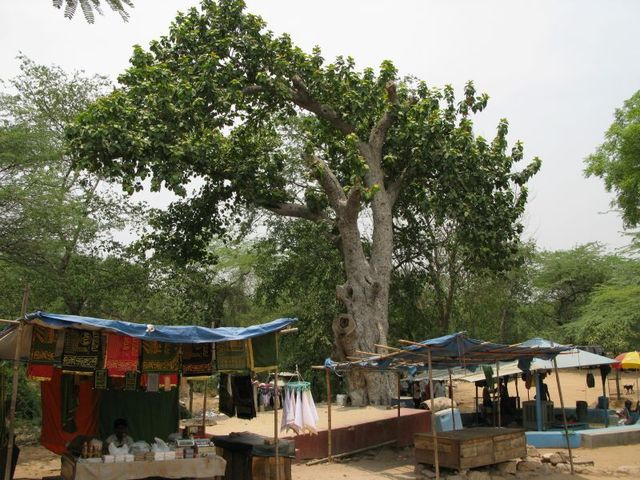 Image of Tree a048