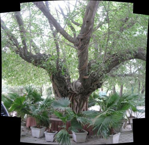Image of Tree a049