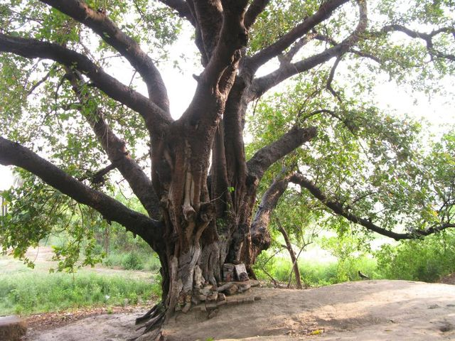 Image of Tree a052