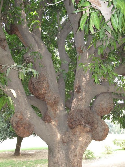 Image of Tree a053