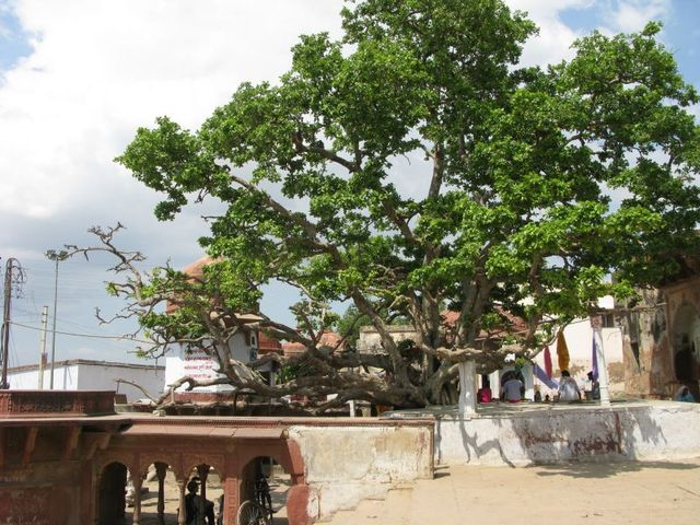 Image of Tree a069