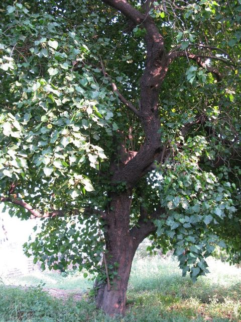 Image of Tree a072