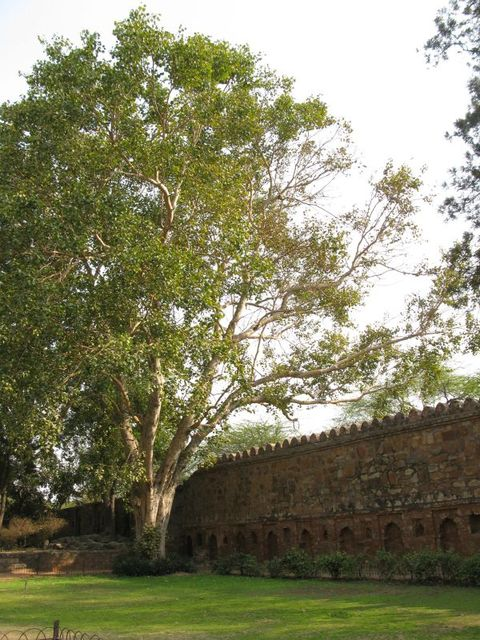Image of Tree a076