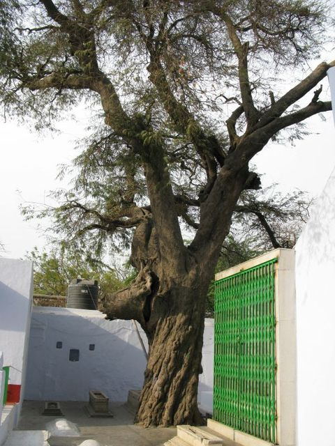 Image of Tree a077