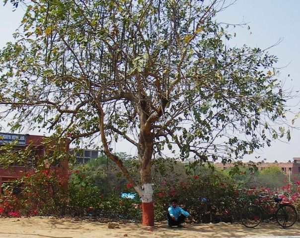 Image of Tree a078