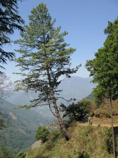 Image of Tree b005
