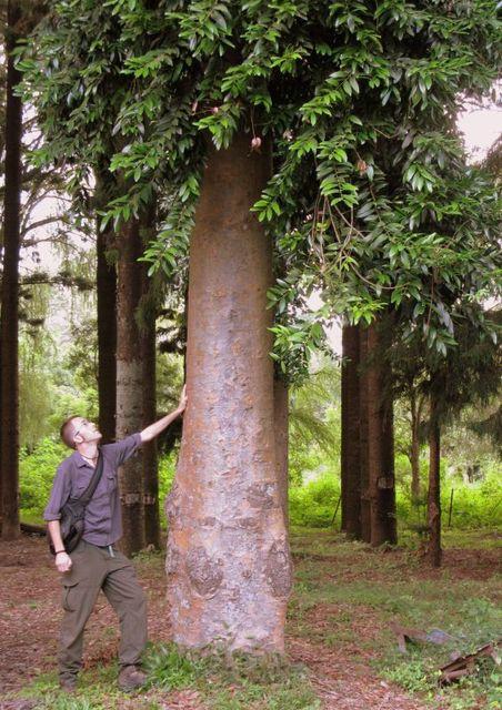 Image of Tree b014