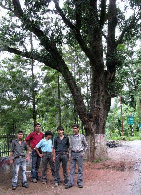 Image of Tree b016