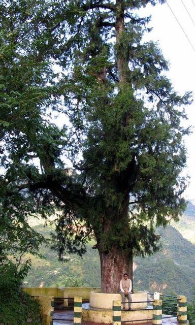 Image of Tree b017