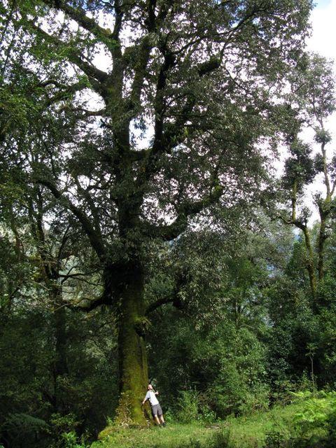Image of Tree b018