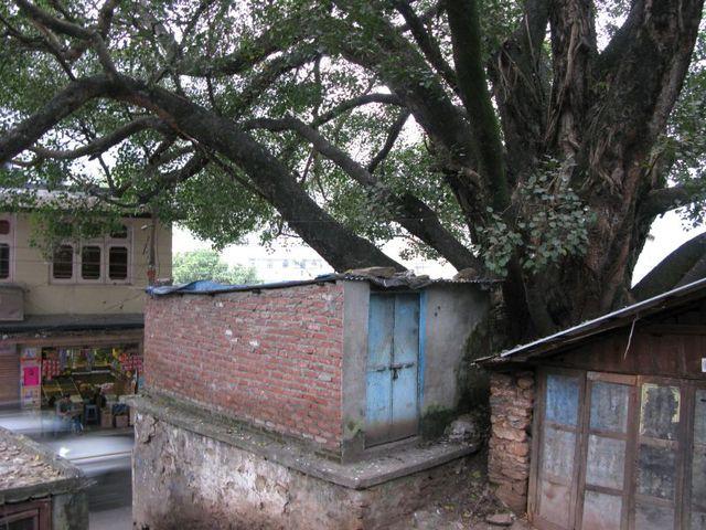 Image of Tree b023