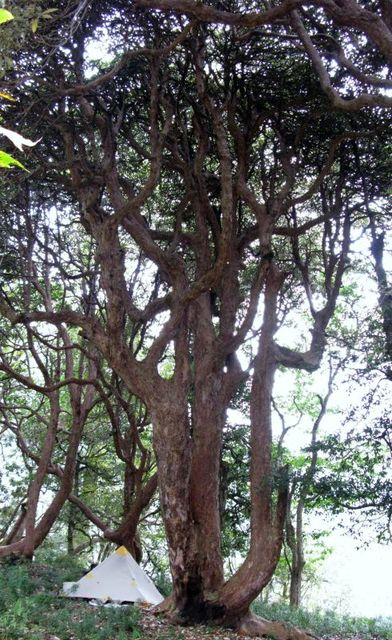 Image of Tree b026