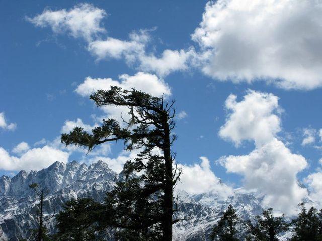Image of Tree b031
