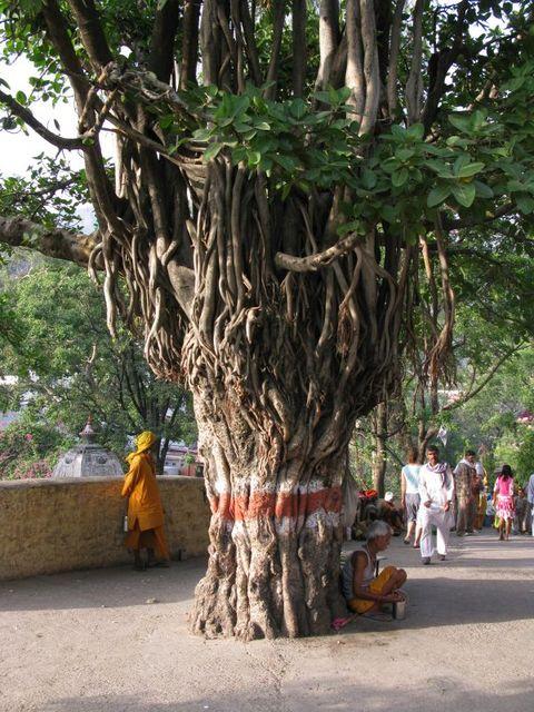 Image of Tree b032