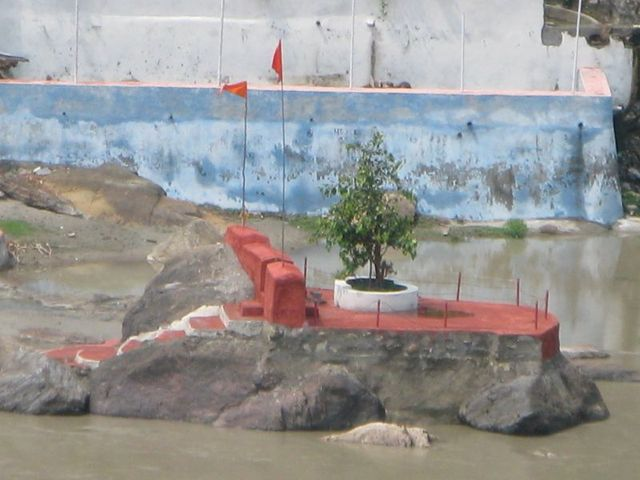 Image of Tree b035