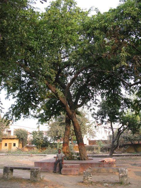 Image of Tree c007