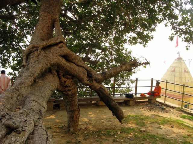 Image of Tree c009