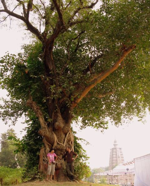 Image of Tree c012