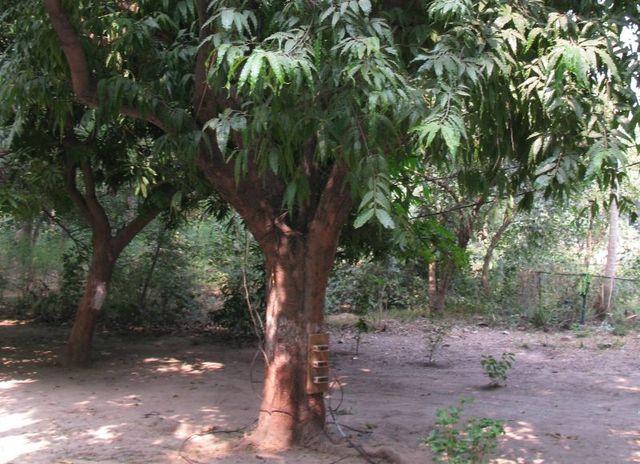 Image of Tree c013