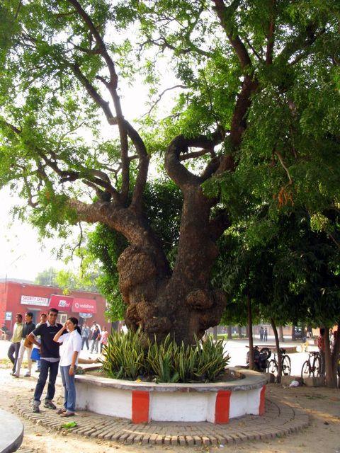 Image of Tree c014