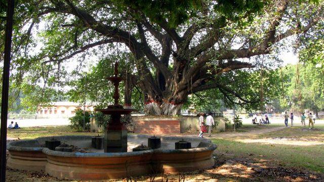 Image of Tree c015