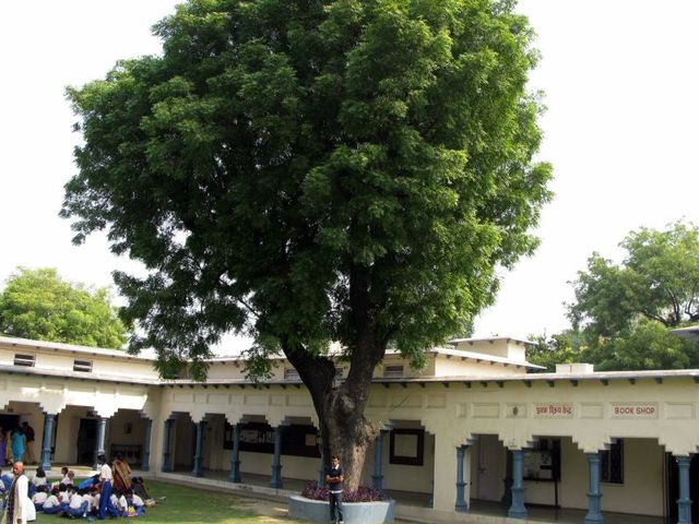 Image of Tree c016