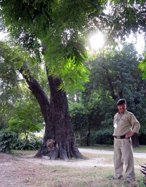 Image of Tree c022