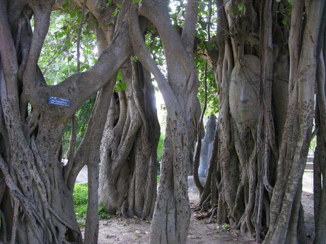 Image of Tree c023