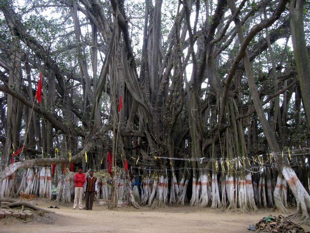 Image of Tree c024