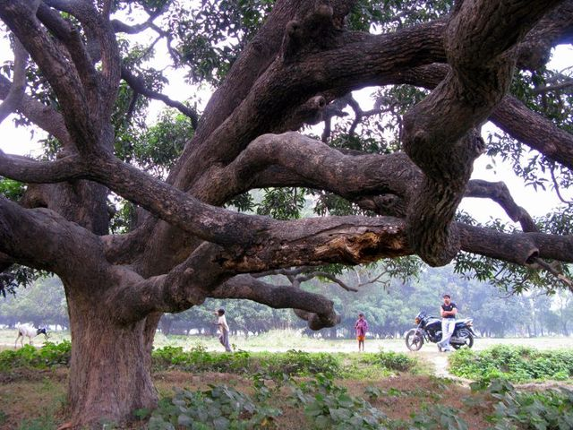 Image of Tree c026