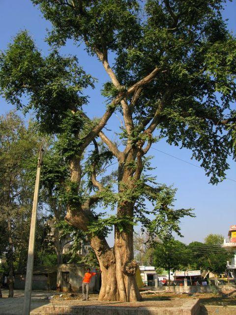 Image of Tree c031