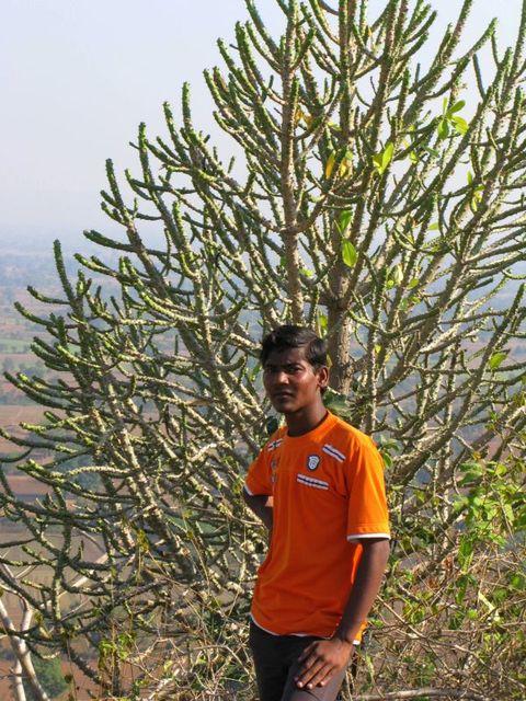 Image of Tree c034