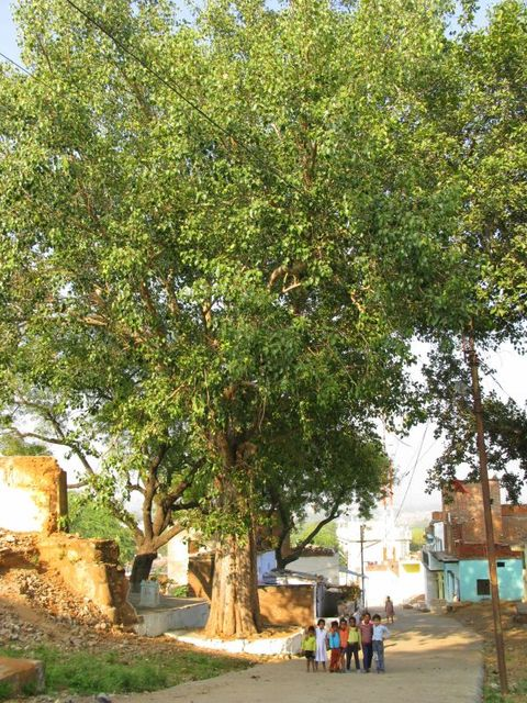 Image of Tree c038