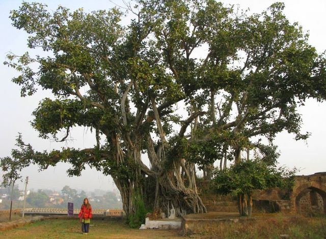 Image of Tree c040