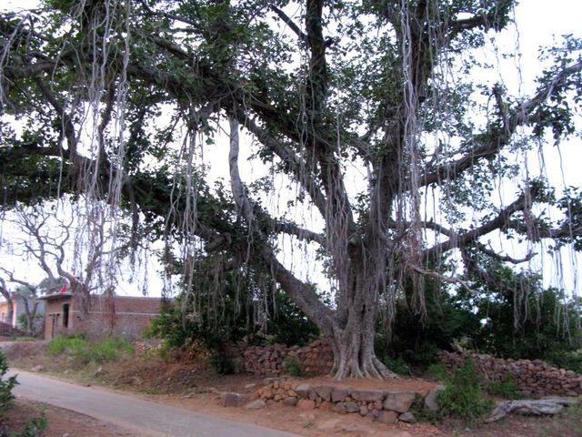 Image of Tree c041
