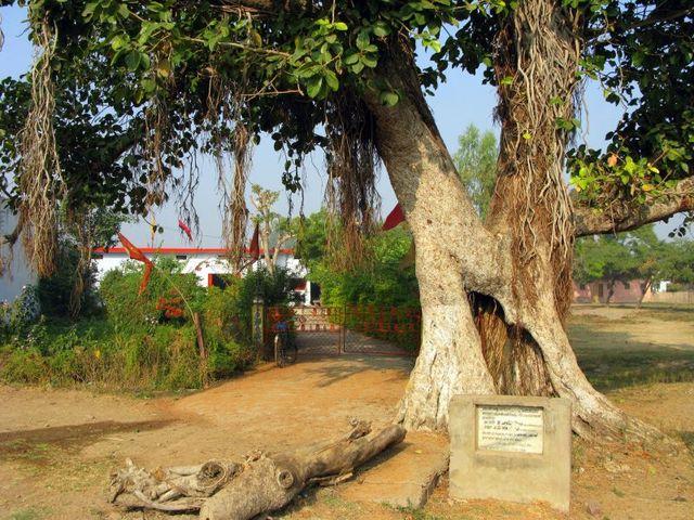 Image of Tree c047