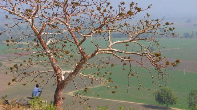 Image of Tree c049