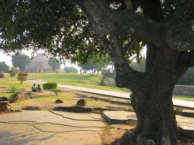 Image of Tree c050