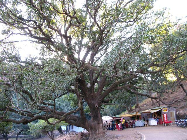 Image of Tree c052