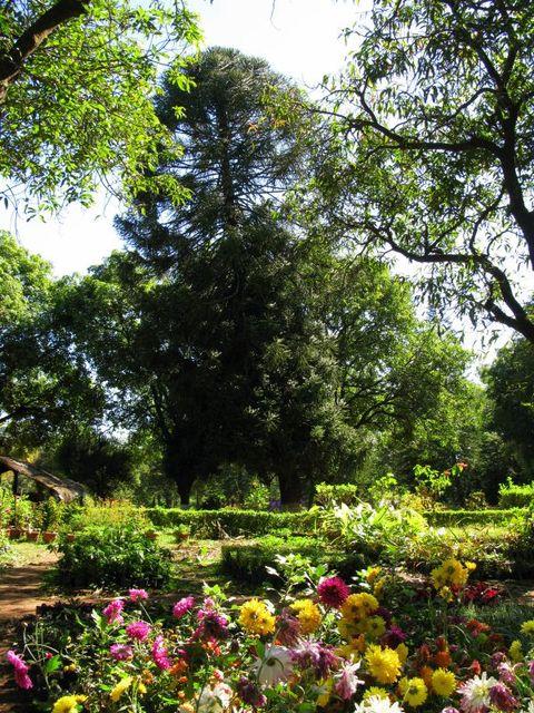 Image of Tree c055