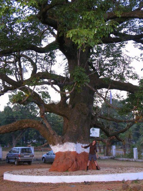 Image of Tree c056