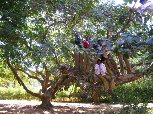 Image of Tree c059