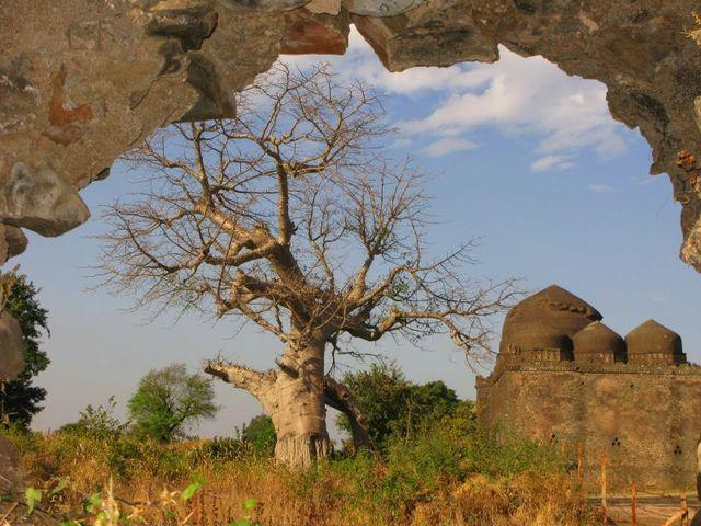 Image of Tree c060